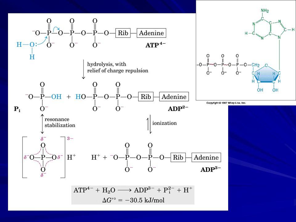 Fosfofrutoquinase-1 (PFK-1) (3) Algumas bactérias e protistas utilizam pirofosfato (PPi) e não ATP nessa etapa como doador de fosfato.