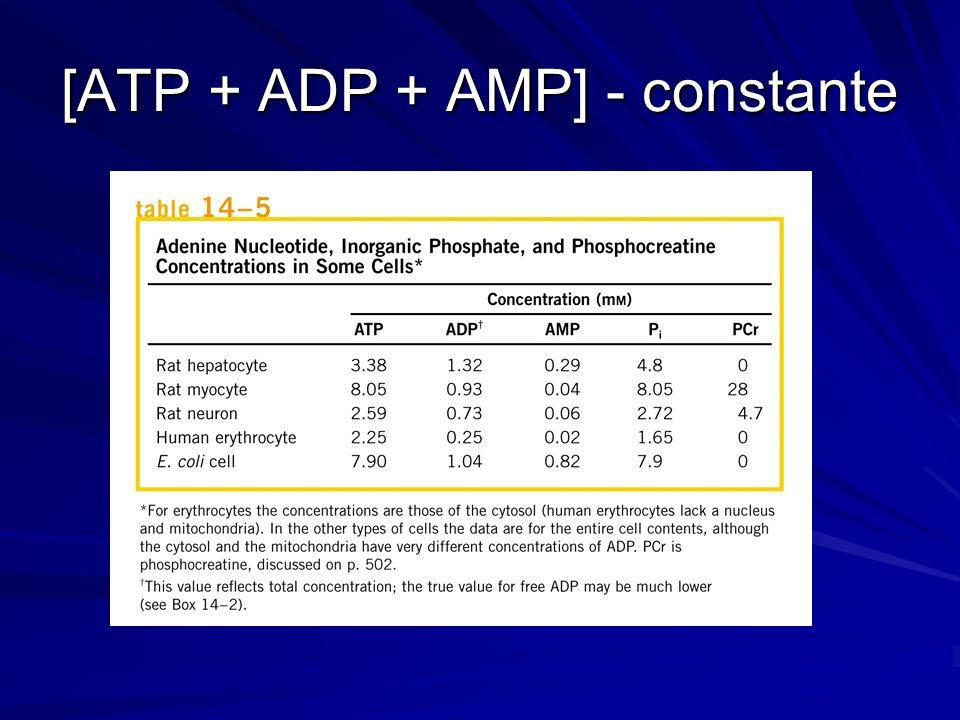 [ATP + ADP + AMP] - constante