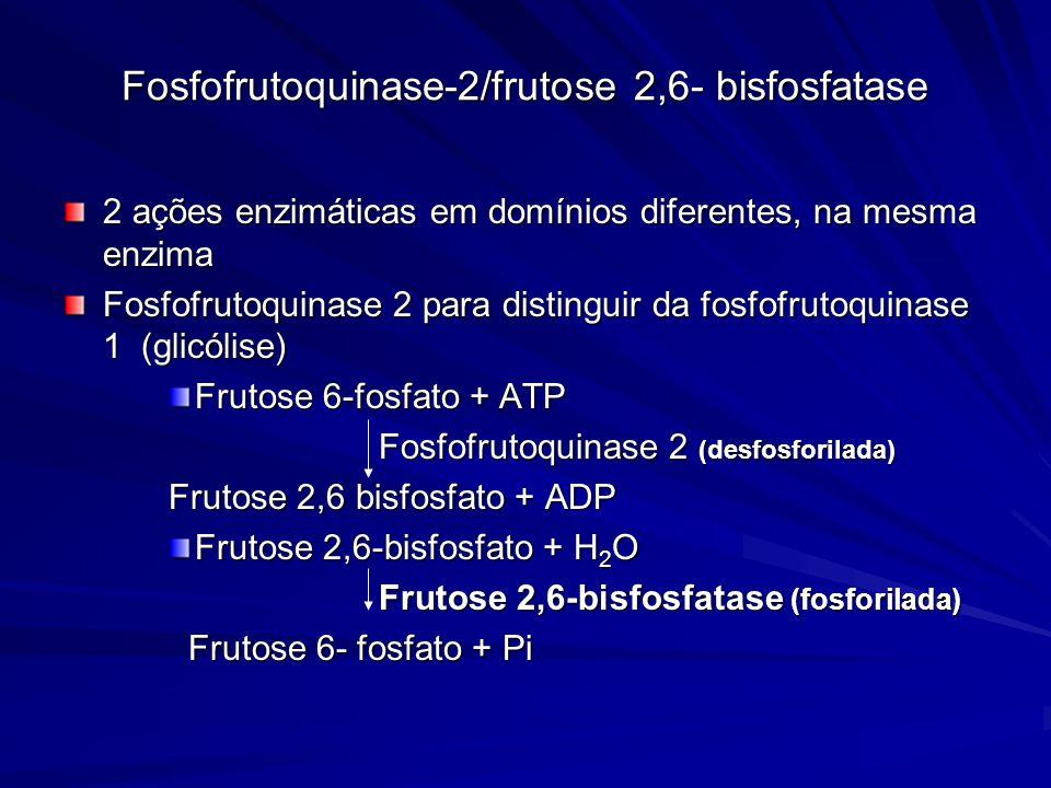 Fosfofrutoquinase-2/frutose 2,6- bisfosfatase 2 ações enzimáticas em domínios diferentes, na mesma enzima Fosfofrutoquinase 2 para distinguir da fosfo