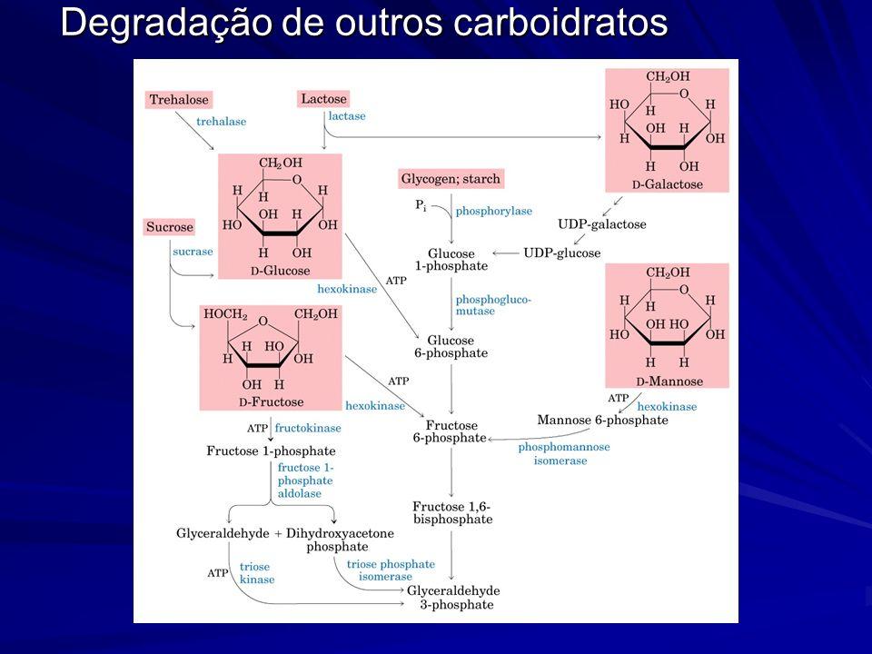 Degradação de outros carboidratos