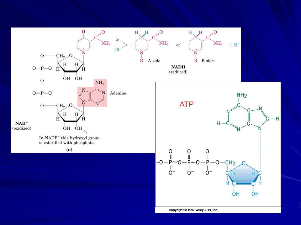 Triose fosfato isomerase (C-1, C-2, C-3) = (C-6, C-5, C-4) da glicose