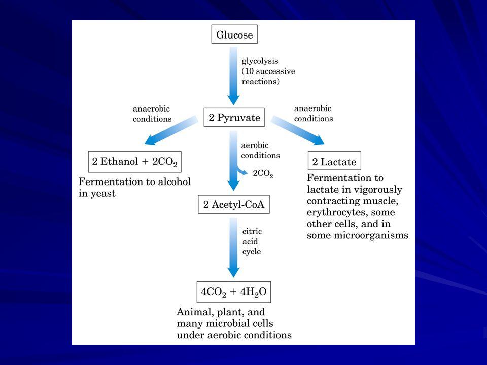 Equação geral da glicólise Glicose + xNAD + + xP i + xADP Piruvato + xNADH + xH+ xATP + xH2O Rendimento: Glicose = CO 2 + H 2 O -2840kJ/mol ATP= ADP + P i -146kJ/mol