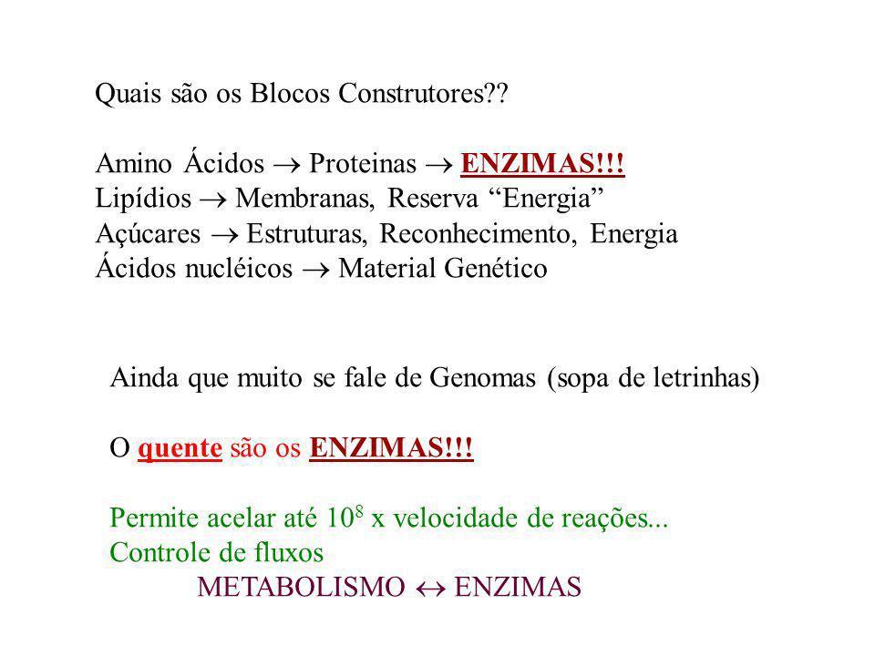 Quais são os Blocos Construtores?? Amino Ácidos Proteinas ENZIMAS!!! Lipídios Membranas, Reserva Energia Açúcares Estruturas, Reconhecimento, Energia