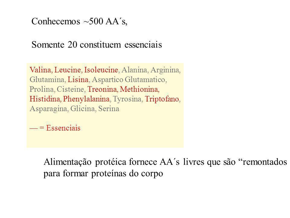 Conhecemos ~500 AA´s, Somente 20 constituem essenciais Valina, Leucine, Isoleucine, Alanina, Arginina, Glutamina, Lisina, Aspartico Glutamatico, Proli
