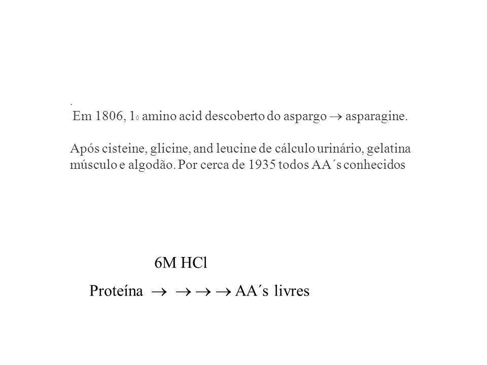 . Em 1806, 1 0 amino acid descoberto do aspargo asparagine. Após cisteine, glicine, and leucine de cálculo urinário, gelatina músculo e algodão. Por c