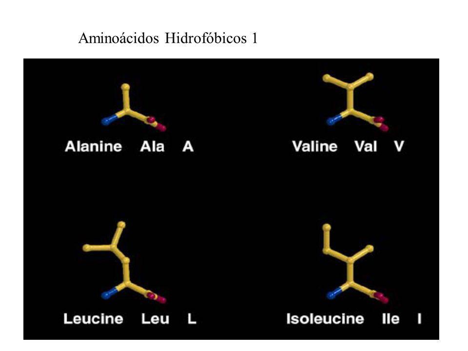 Aminoácidos Hidrofóbicos 1