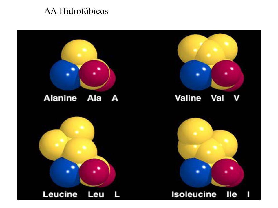 AA Hidrofóbicos