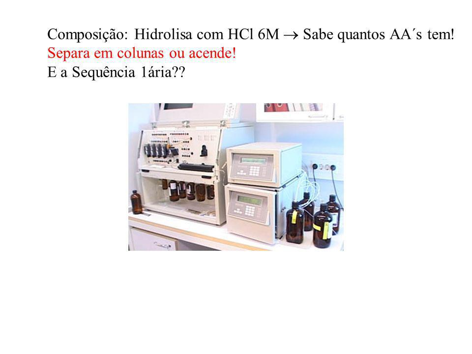 Composição: Hidrolisa com HCl 6M Sabe quantos AA´s tem! Separa em colunas ou acende! E a Sequência 1ária??
