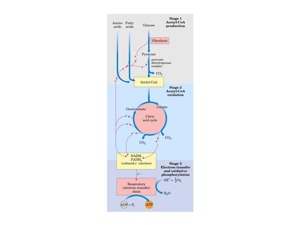 Centro ferro-enxofre de aconitase