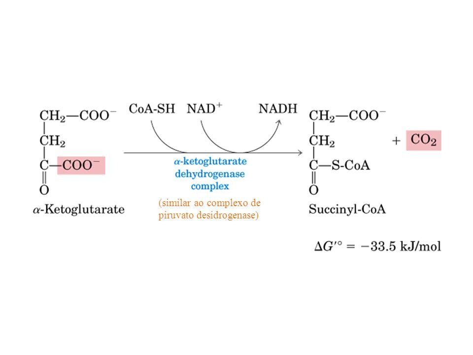 (similar ao complexo de piruvato desidrogenase)