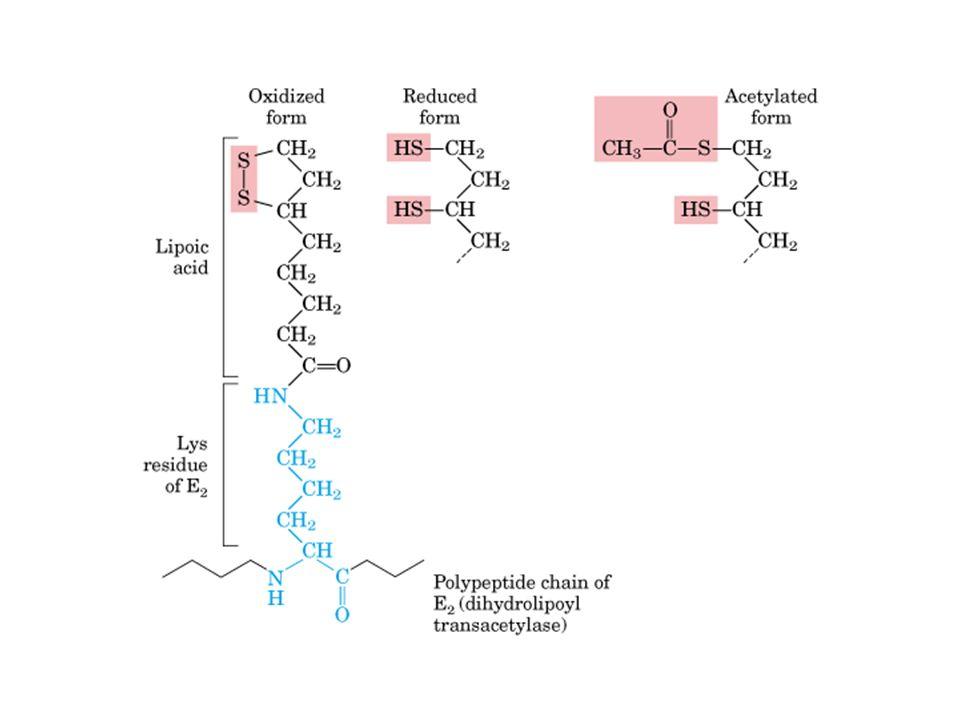 Biotina - o grupo prostético de piruvato carboxilase - carrega grupos CO 2