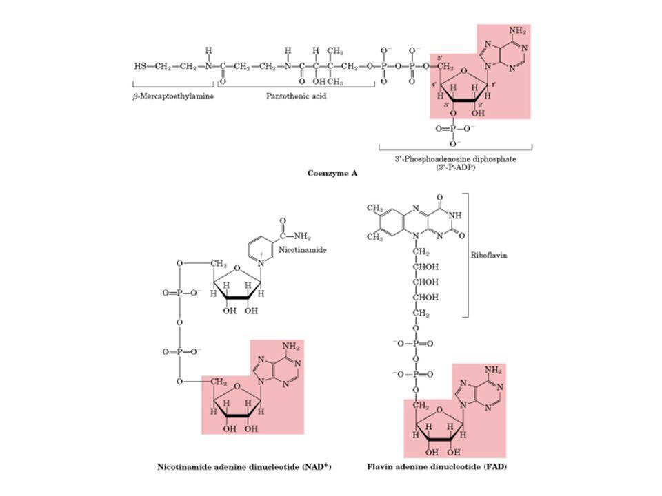 Regulação do Cíclo de Krebs