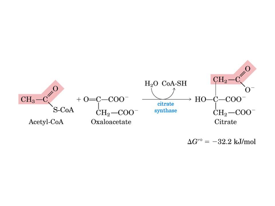 Mudança Conformacional em Citrato Sintase, um exemplo de Alosteria azul e cinza – subunidades do homodímero vermelho – acetil-CoA; amarelo - oxaloacteato