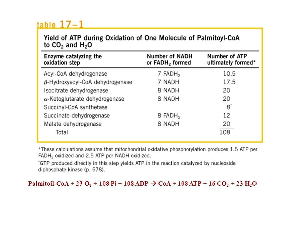 Palmitoil-CoA + 23 O 2 + 108 Pi + 108 ADP CoA + 108 ATP + 16 CO 2 + 23 H 2 O