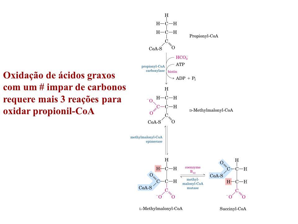 Oxidação de ácidos graxos com um # impar de carbonos requere mais 3 reações para oxidar propionil-CoA