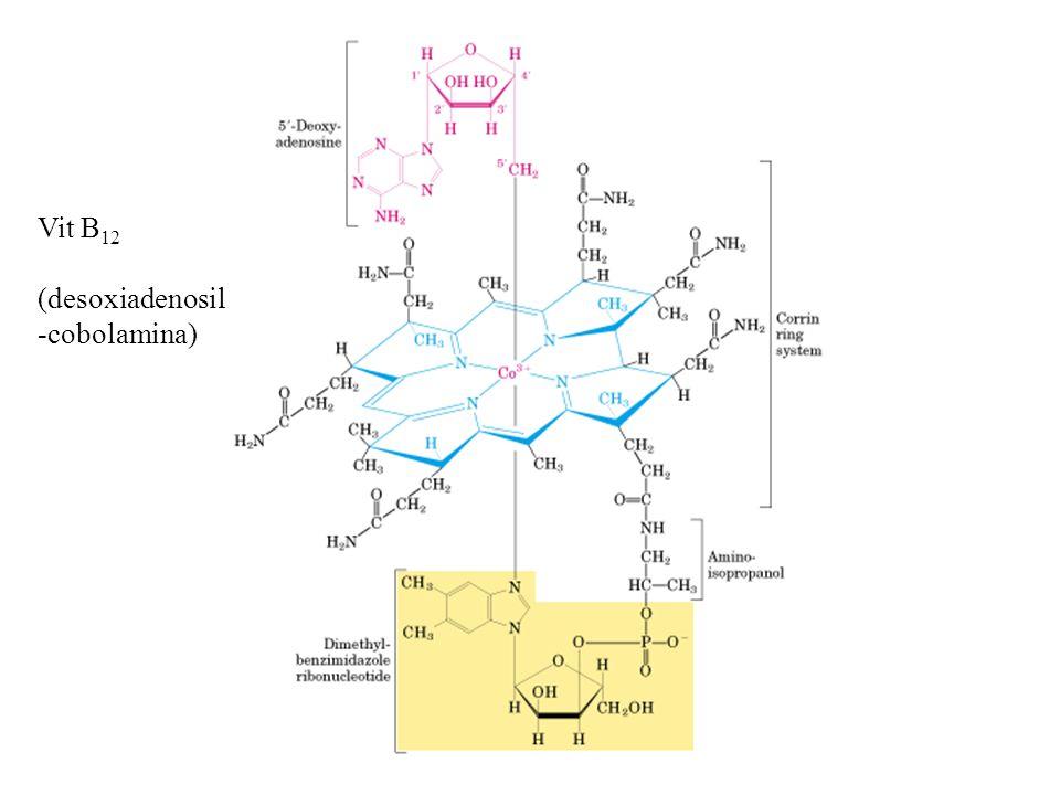 Vit B 12 (desoxiadenosil -cobolamina)