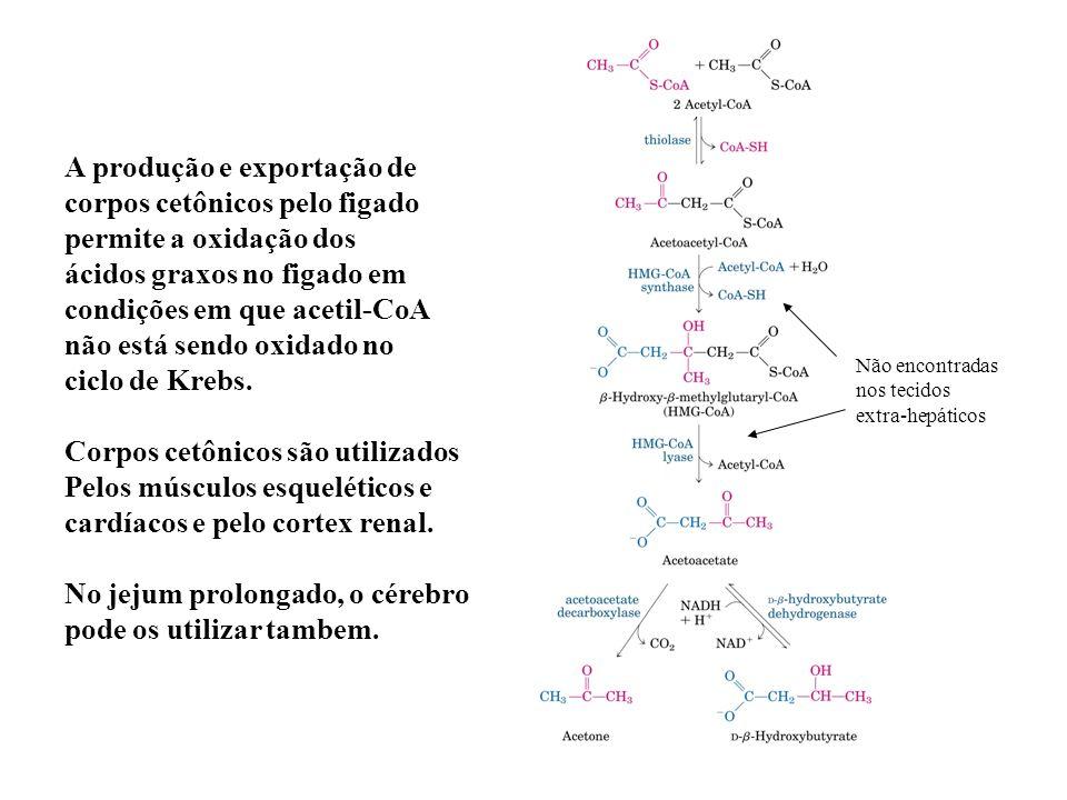 A produção e exportação de corpos cetônicos pelo figado permite a oxidação dos ácidos graxos no figado em condições em que acetil-CoA não está sendo o