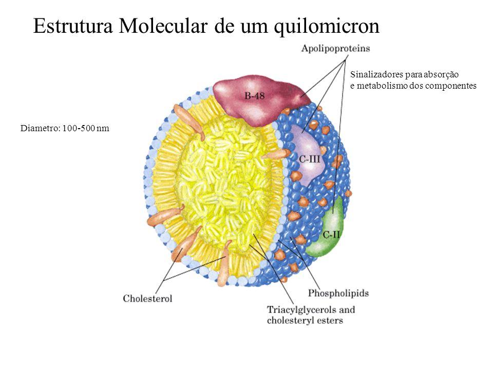 Estrutura Molecular de um quilomicron Diametro: 100-500 nm Sinalizadores para absorção e metabolismo dos componentes