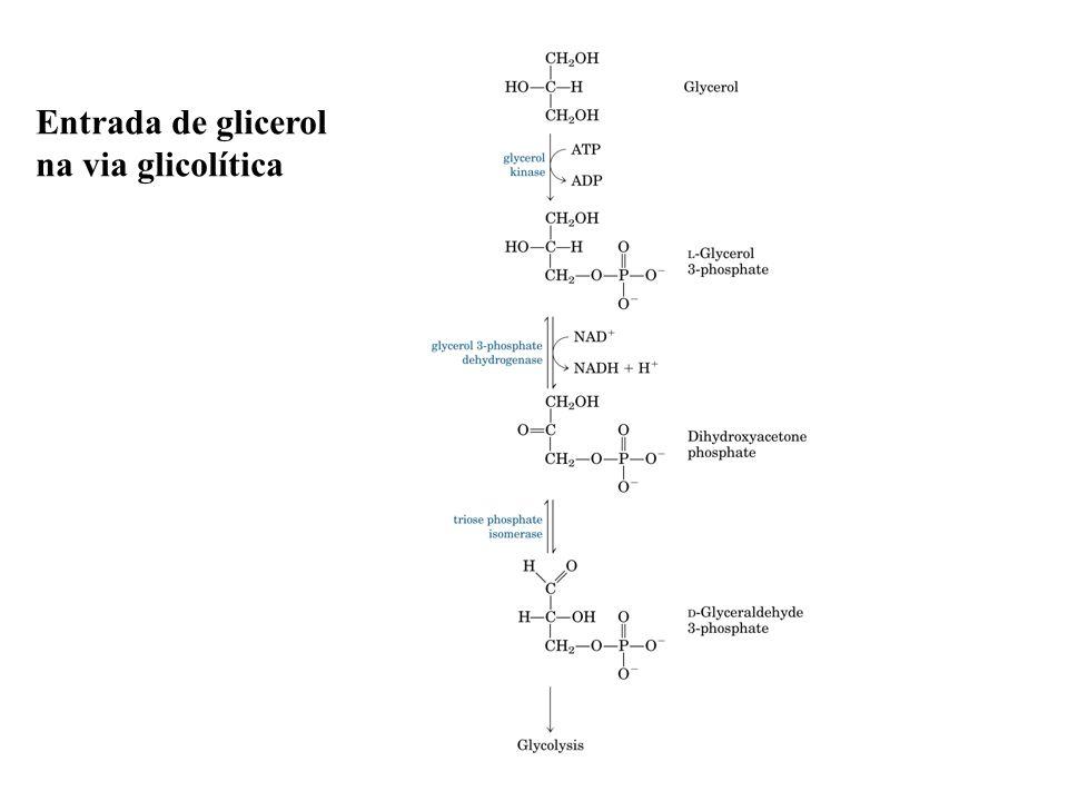 Entrada de glicerol na via glicolítica