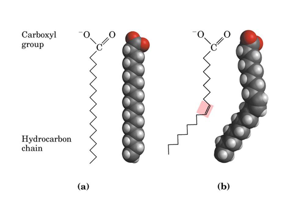 Assimetria de distribuição de fosfolipídeos na membrana plasmática de hemácias