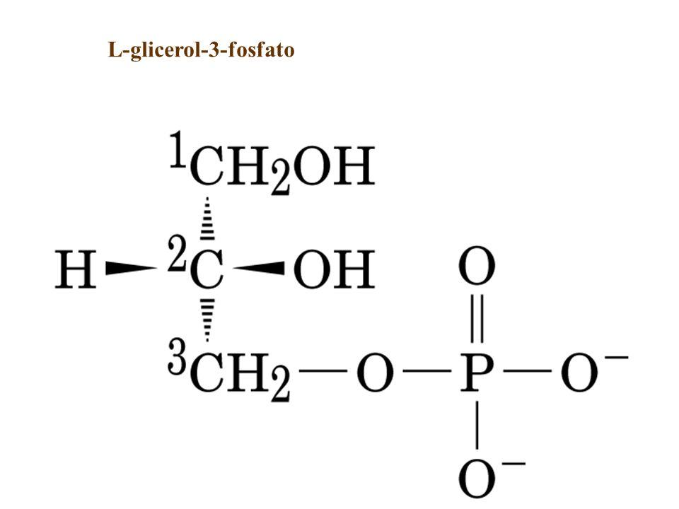 L-glicerol-3-fosfato