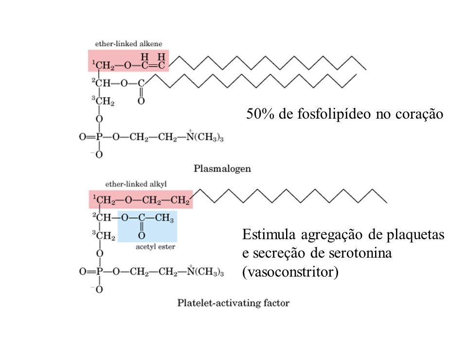 50% de fosfolipídeo no coração Estimula agregação de plaquetas e secreção de serotonina (vasoconstritor)