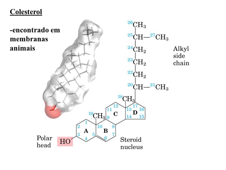 Colesterol -encontrado em membranas animais