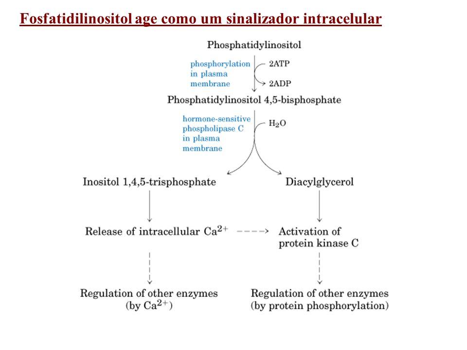 Fosfatidilinositol age como um sinalizador intracelular