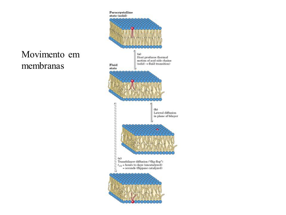 Movimento em membranas