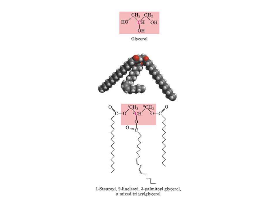 Proteínas membranais envolvidas em interações célula-célula