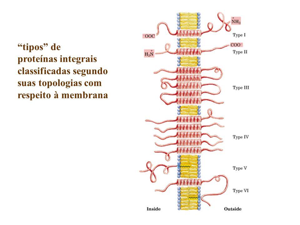 tipos de proteínas integrais classificadas segundo suas topologias com respeito à membrana