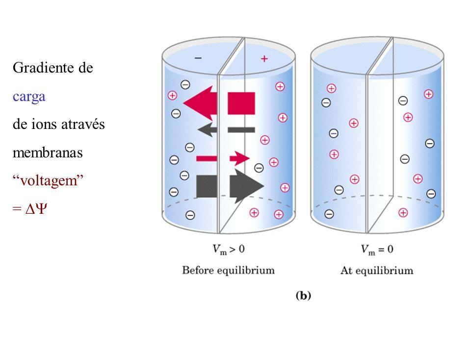 Gradiente de carga de ions através membranas voltagem =