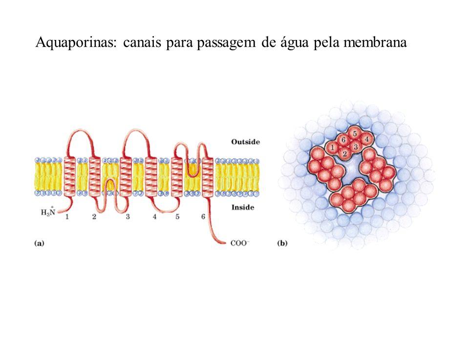 Aquaporinas: canais para passagem de água pela membrana