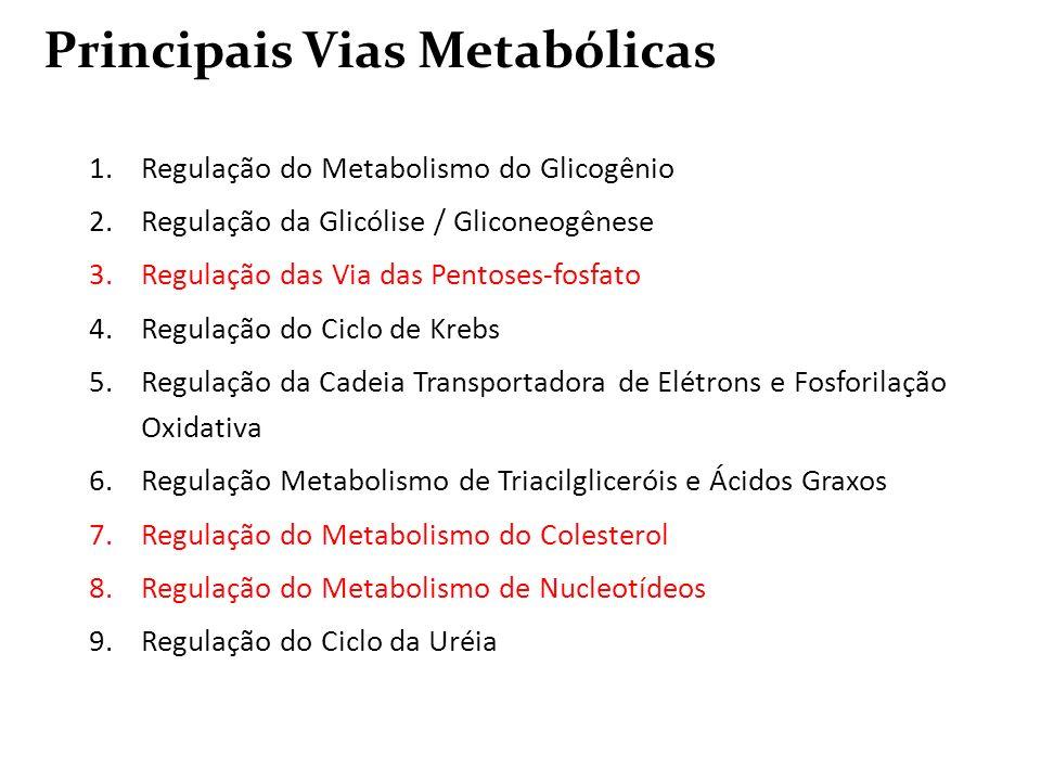 1.Regulação do Metabolismo do Glicogênio 2.Regulação da Glicólise / Gliconeogênese 3.Regulação das Via das Pentoses-fosfato 4.Regulação do Ciclo de Kr