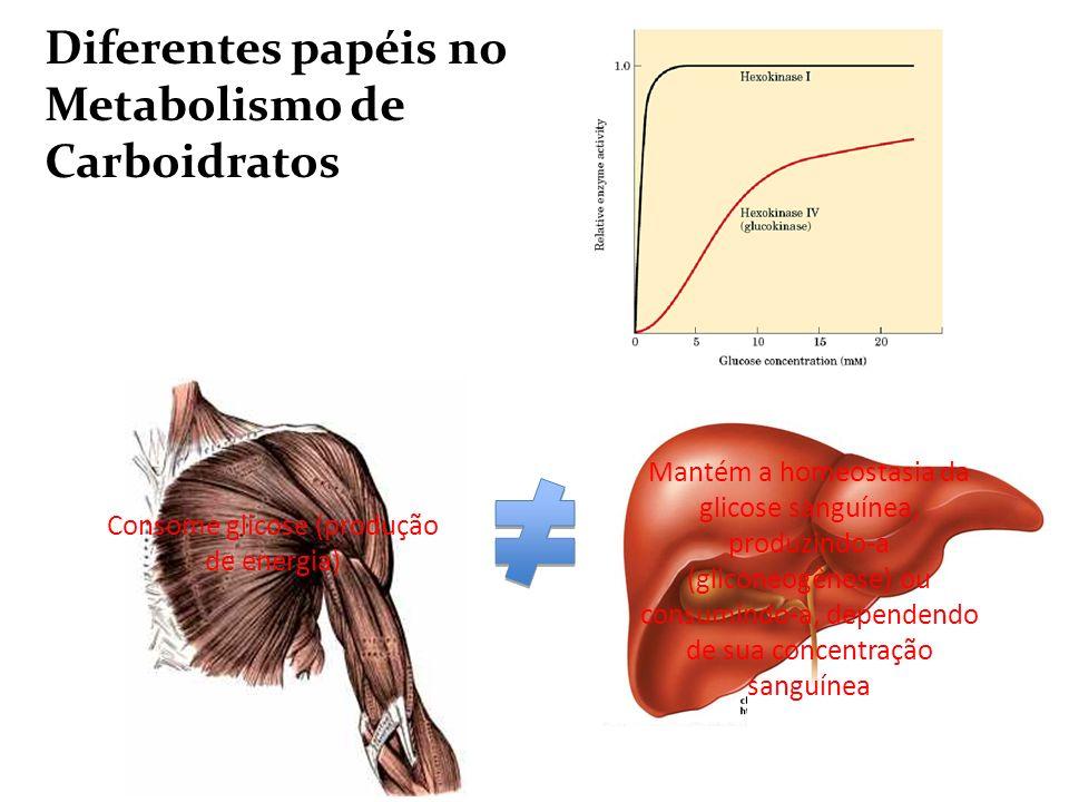 Adenili-ciclase Consome glicose (produção de energia) Diferentes papéis no Metabolismo de Carboidratos Mantém a homeostasia da glicose sanguínea, prod