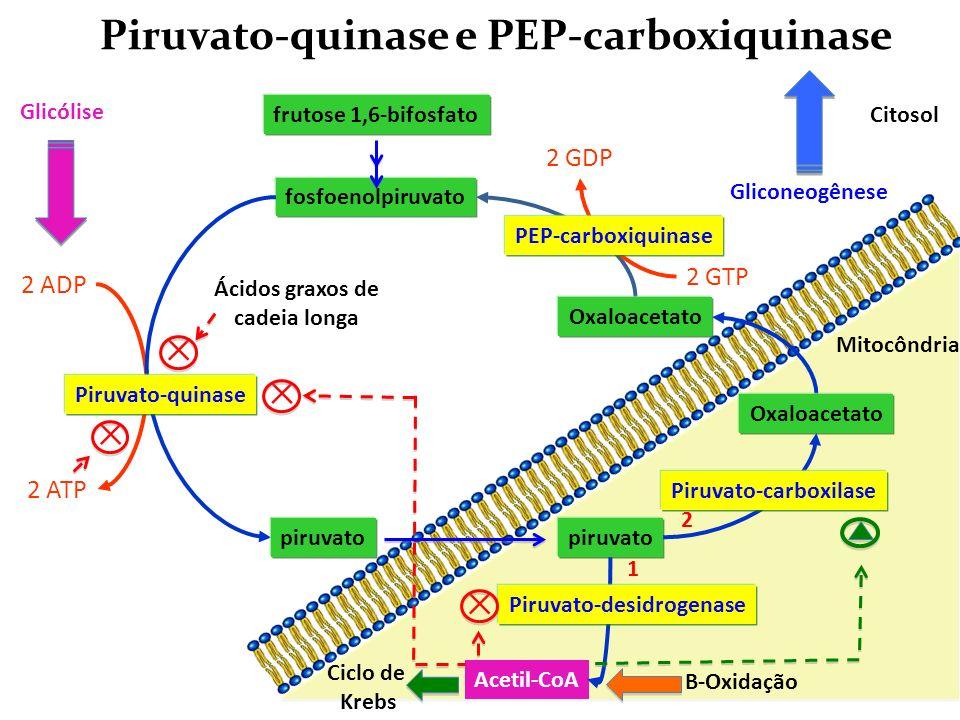 Piruvato-quinase e PEP-carboxiquinase fosfoenolpiruvato 2 ADP 2 ATP piruvato frutose 1,6-bifosfato Piruvato-quinase Oxaloacetato piruvato Oxaloacetato