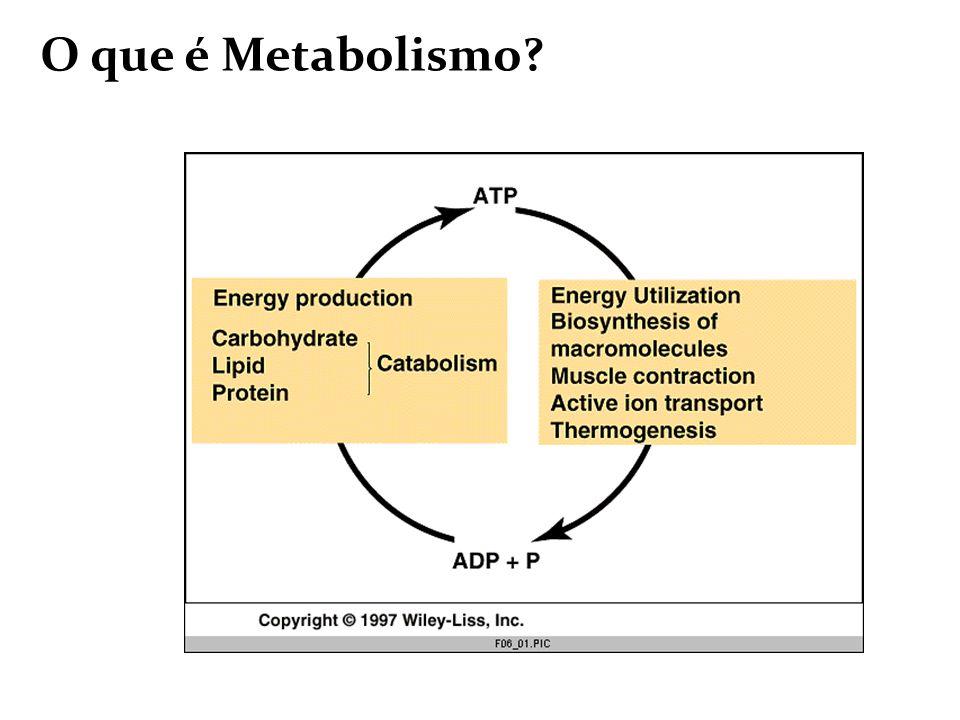O que é Metabolismo?