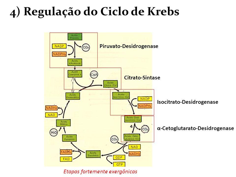 4) Regulação do Ciclo de Krebs Piruvato-Desidrogenase Citrato-Sintase Isocitrato-Desidrogenase α-Cetoglutarato-Desidrogenase Etapas fortemente exergôn