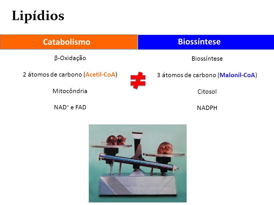 Lipídios Catabolismo Biossíntese β-Oxidação 2 átomos de carbono (Acetil-CoA) Mitocôndria NAD + e FAD Biossíntese 3 átomos de carbono (Malonil-CoA) Cit