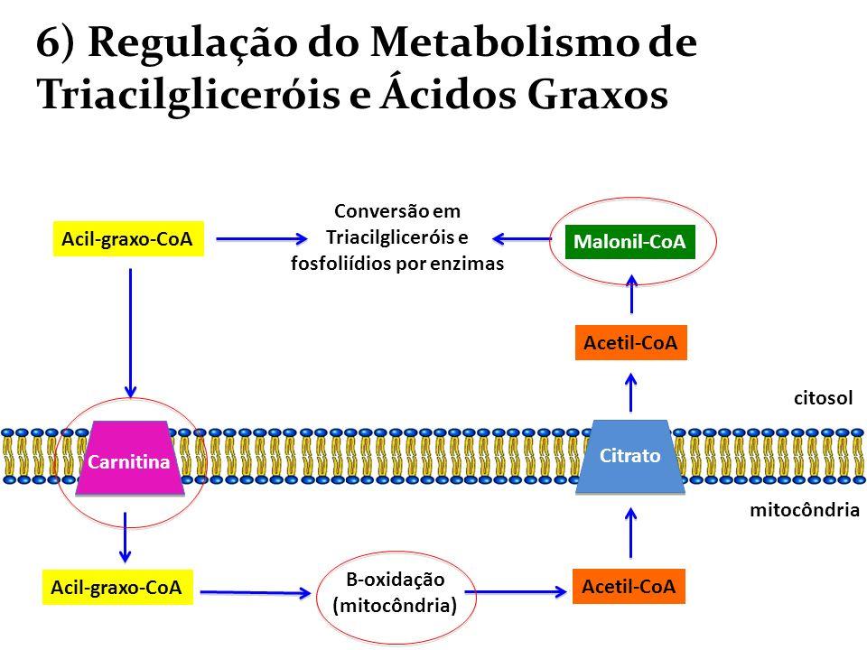 6) Regulação do Metabolismo de Triacilgliceróis e Ácidos Graxos Acil-graxo-CoA B-oxidação (mitocôndria) Conversão em Triacilgliceróis e fosfoliídios p