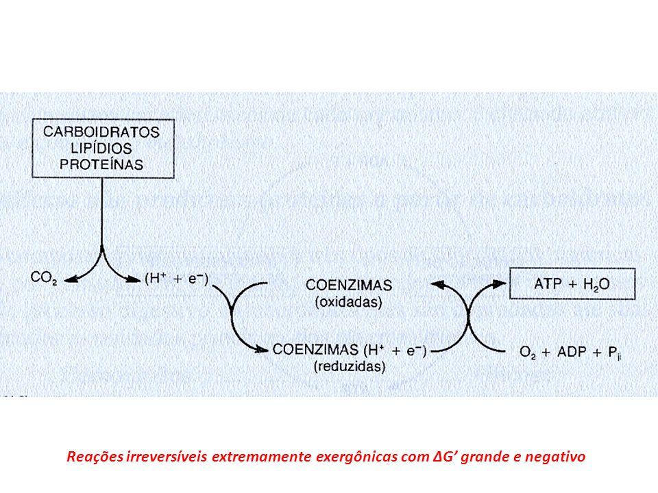 Reações irreversíveis extremamente exergônicas com ΔG grande e negativo
