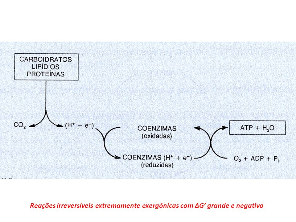 A) Proteína Glicose.SIM (1 e 2) NÃO 1 1 2 2 2 B) Proteína Ácido Graxo.