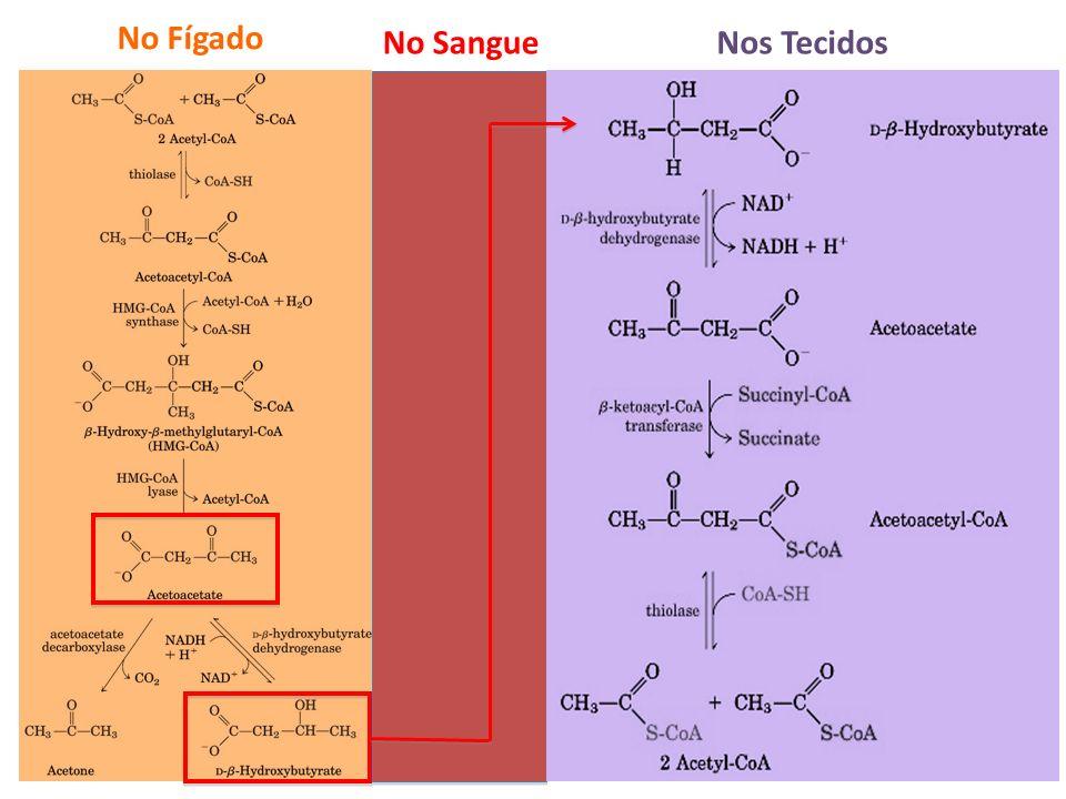Exatamente o inverso da última reação da β-oxidação No Fígado Nos TecidosNo Sangue
