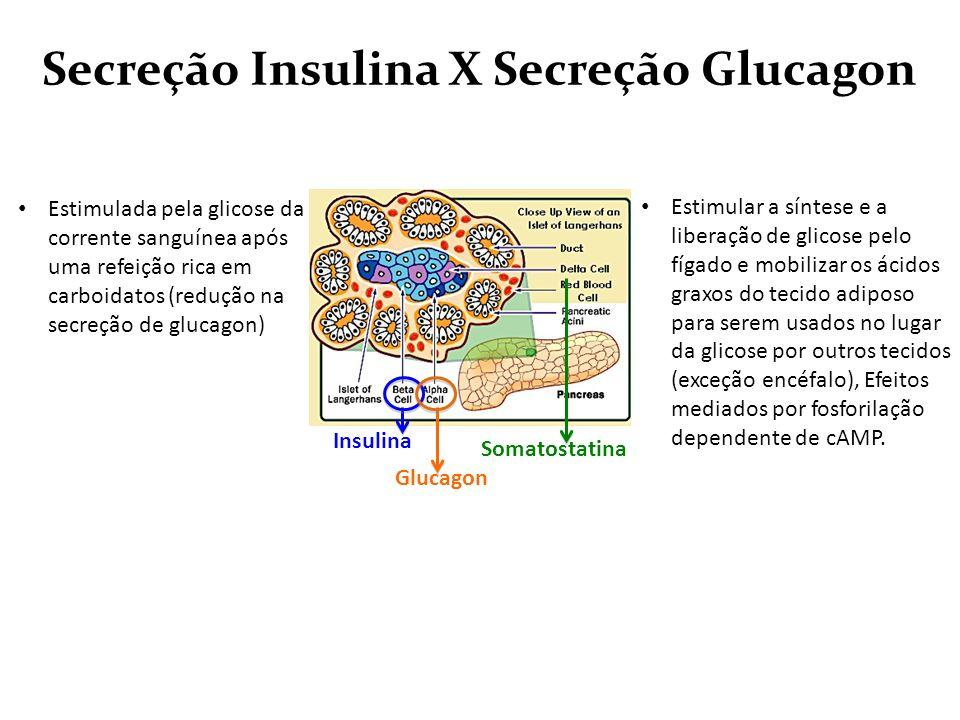 Secreção Insulina X Secreção Glucagon Estimulada pela glicose da corrente sanguínea após uma refeição rica em carboidatos (redução na secreção de gluc