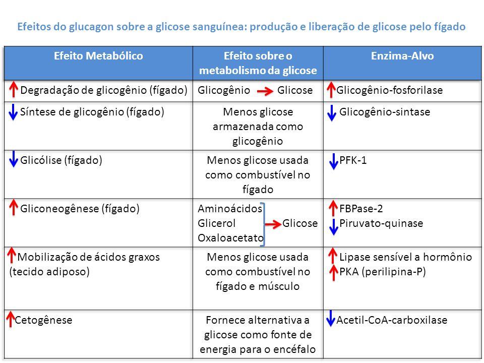 Efeitos do glucagon sobre a glicose sanguínea: produção e liberação de glicose pelo fígado