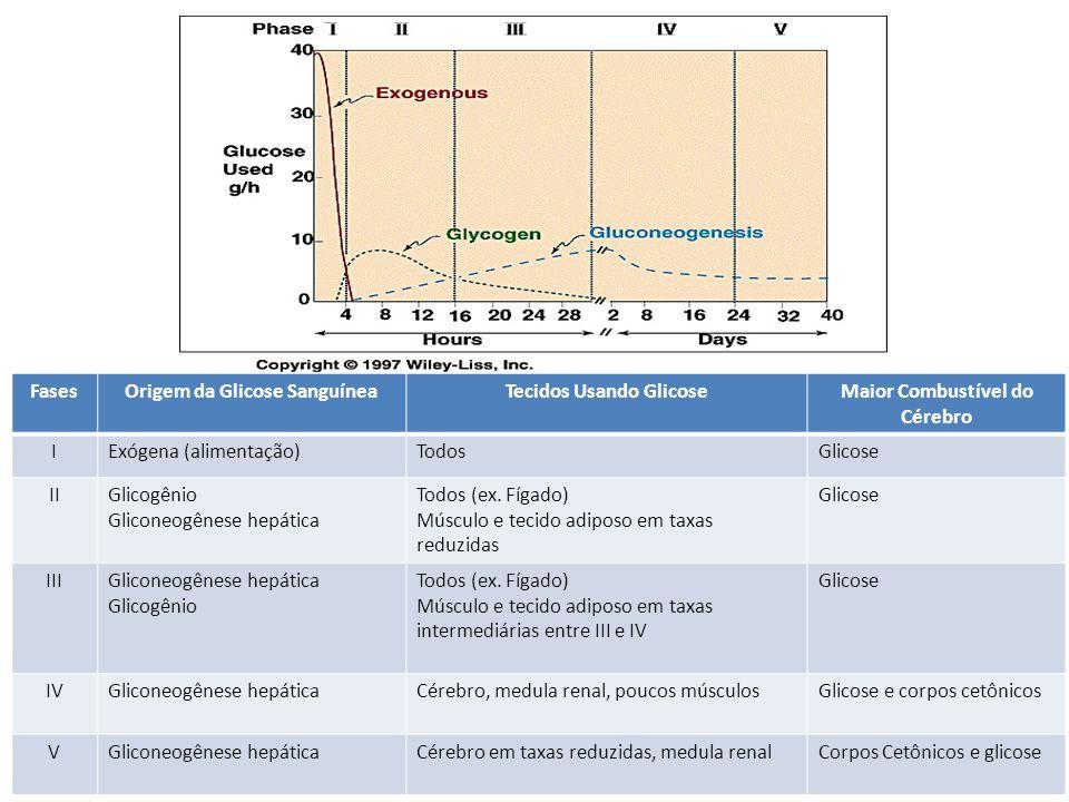 FasesOrigem da Glicose SanguíneaTecidos Usando GlicoseMaior Combustível do Cérebro IExógena (alimentação)TodosGlicose IIGlicogênio Gliconeogênese hepá