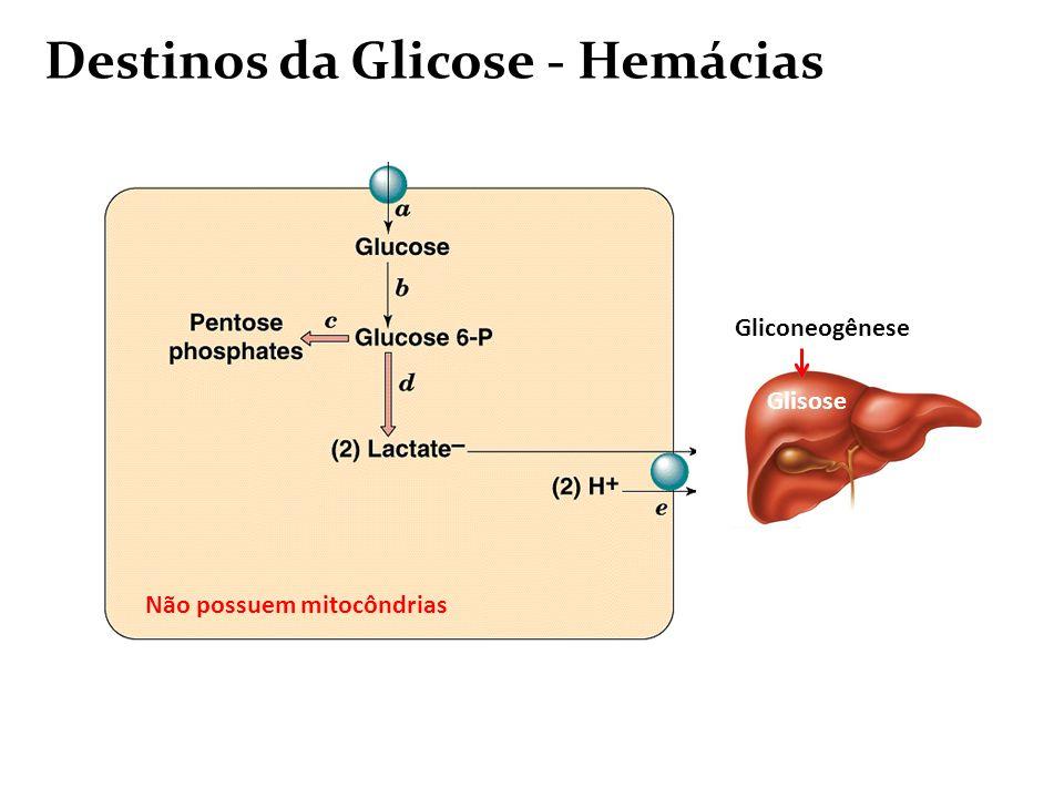 Glicose e as principais vias metabólicas Glicólise: Glicose Piruvato (citosol) Conecção da Glicólise e o Ciclo de Krebs: Piruvato Acetil-CoA (mitocôndria) Ciclo de Krebs: Acetil-CoA CO2 (mitocôndria) Via das Pentoses Fosfato: via alternativa de oxidação da glicose que leva a formação da Ribose-5-fosfato e NADPH Fermentação (láctica ou alcóolica): destino do Piruvato em condições anaeróbias Catabolismo Biossíntese Gliconeogênese: ocorre no fígado e a partir de precursores glicogênicos: Ciclo de Cori: Músculo: Glicogênio Lactato Fígado: LactatoGlicose Ciclo Glicose-Alanina: Músculo: Glicose Piruvato Alanina Fígado: Alanina Piruvato Glicose Armazenamento Metabolismo do Glicogênio: Glicogênese e Glicogenólise