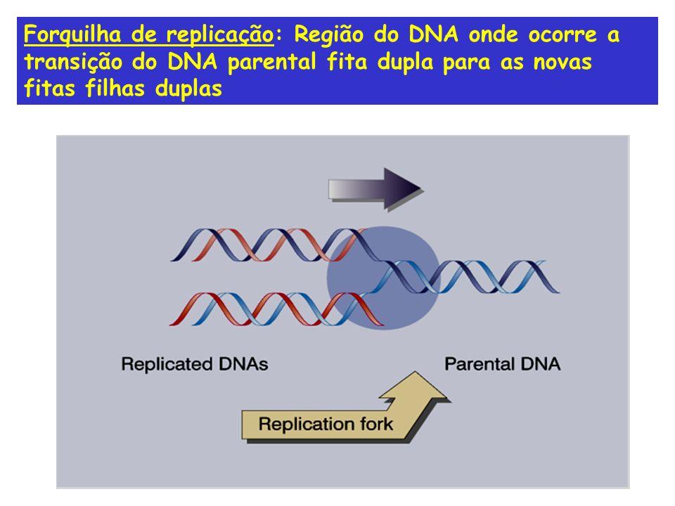 Forquilha de replicação: Região do DNA onde ocorre a transição do DNA parental fita dupla para as novas fitas filhas duplas