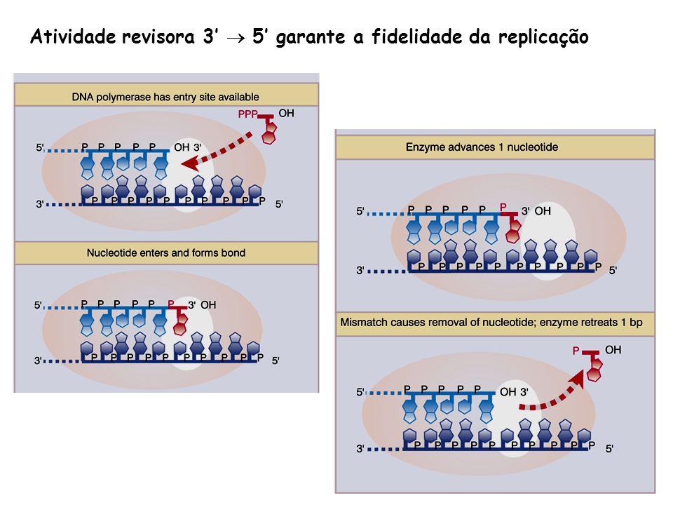 Atividade revisora 3 5 garante a fidelidade da replicação