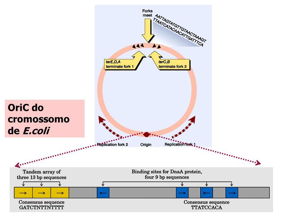 OriC do cromossomo de E.coli